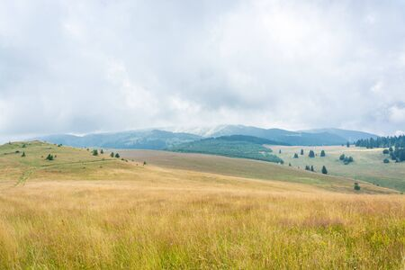 Foggy morning mountain meadow, pine trees, forests, yellow pastures and hills against cloudy sky Stock Photo