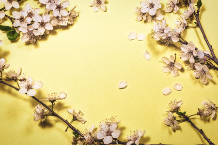 White spring blossom on yellow color background, top view with copy space. Vintage floral background. Floral pattern. Stock Photo