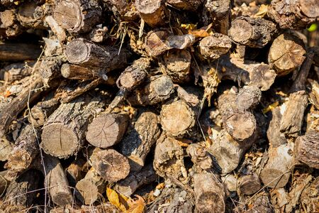 Close-up view of pile of chopped firewood prepared for winter. Textured background.