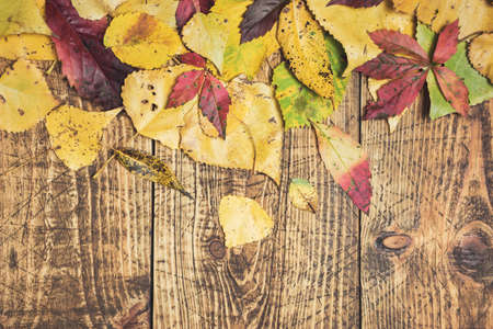 Autumn background with fall leaves on rustic wooden board. Flat lay with space for advertisement.