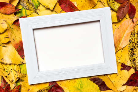 Bright and colorful autumn frame of fallen leaves with white copy space for advertisement. 免版税图像