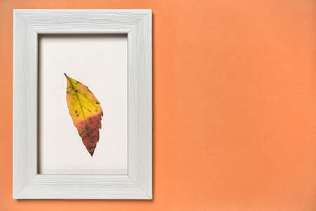 Minimal autumn composition. White wooden photo frame with colorful fallen leaf on orange background. Flat lay, copy space. Nature concept. 免版税图像