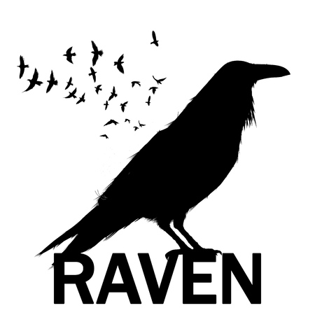 Graphic black and white crow isolated on white background. Old and wise bird. Raven Halloween character. Hand drawn sketch style vector illustration. Wall decoration sticker.