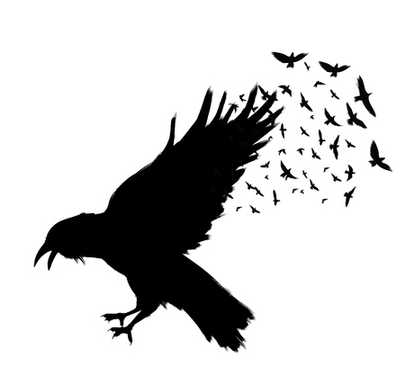 Raven Flying . Black raven isolated on white background. Hand drawn crow.