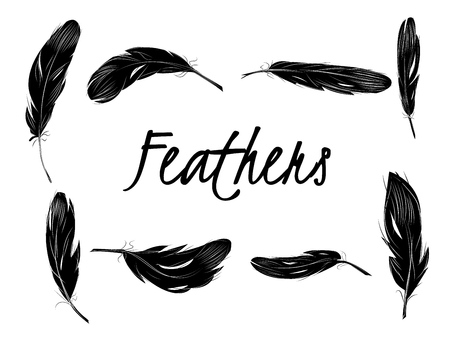Set of isolated black feathers on transparent background in realistic style vector illustration.