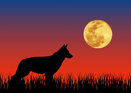 Vector illustration of dog in the  night