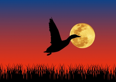 Vector illustration of duck in the night