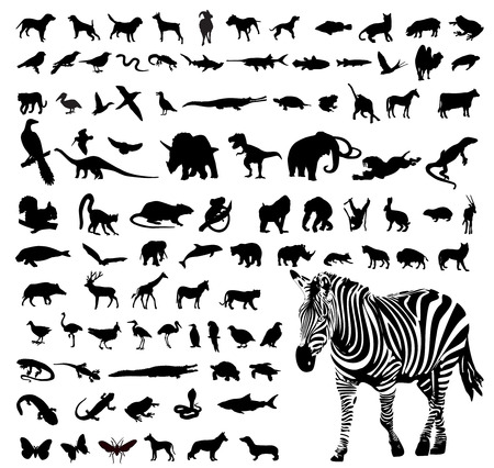 Vector illustration of animals silhouettes