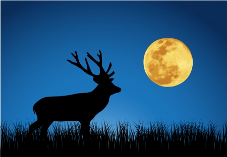 Vector illustration of deer and moon  Illustration