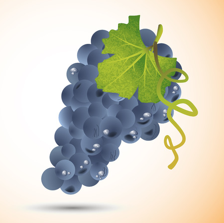 Vector grape Illustration