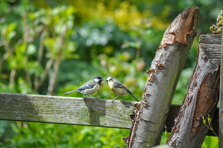 Two birds kissing together in love together kissing valentine lovebirds birding friendly friendly