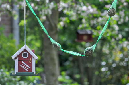 Birdhouse in the backyard fat bulbs bird feed birds Stock Photo