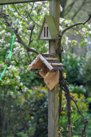 Birdhouse bird birdhouse feed bird food eat fatball fat globules moss background