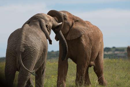amigos abrazandose: Besar elefantes