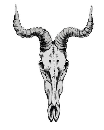 he goat: Hand Drawn Goat Skull Vector Illustration