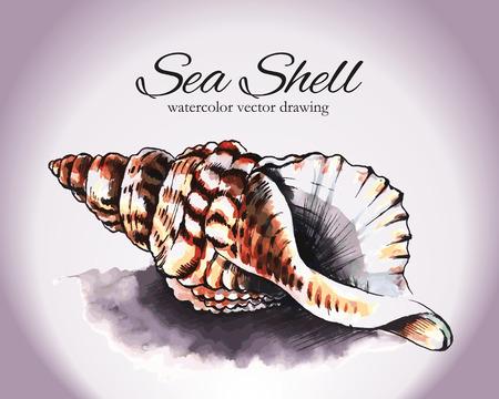 Sea Shell Watercolor Drawing