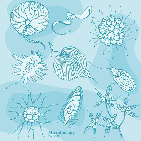 Microbiology Organisms Stock Vector - 38772297
