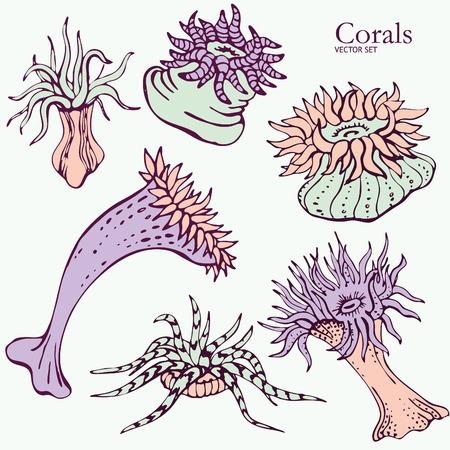 polyp: Corals Vector set