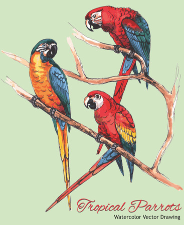 popinjay: Three Bright Macaw Parrots on a Branch (Watercolor Vector Drawing)