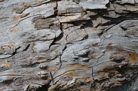 cranny: Old wood texture