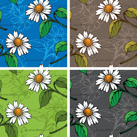 daisy wheel: Seamless Background with hand-drawn Chamomiles