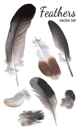 feathering: Feathers Collection, High Quality Vector Illustration