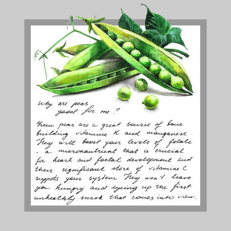 green peas: Card with watercolor  hand-drawn green peas and text Illustration