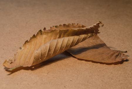 convolute: Autumn dry fallen leaves