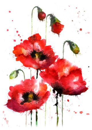 red grass: Watercolor hand-drawn poppy flowers