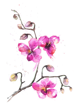 Watercolor illustrated orchid flowers