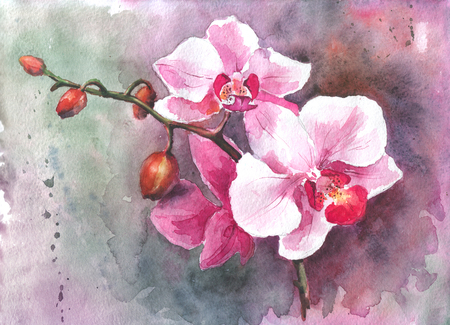 Watercolor hand-drawn orchid flowers Stock Photo