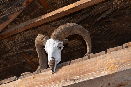billy goat: Goat skull on the straw roof beam Stock Photo