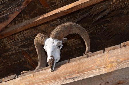 goat head: Goat skull on the straw roof beam Stock Photo