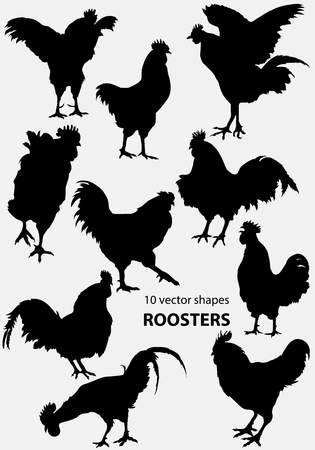 delineate: 10 shapes of domestic roosters Illustration