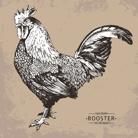 hand-drawn vector vintage style rooster Vettoriali