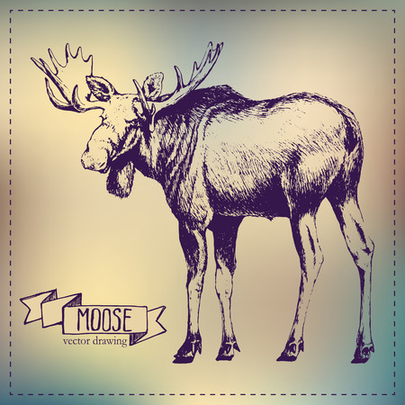 hoofed: Pen graphics vector moose drawing Illustration