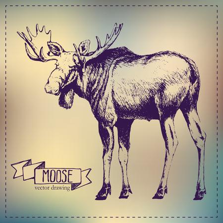 palmate: Pen graphics vector moose drawing Illustration