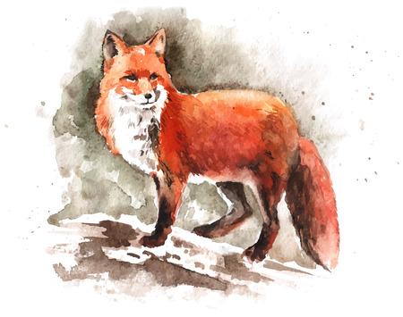 Dibujado a mano de la acuarela-zorro rojo
