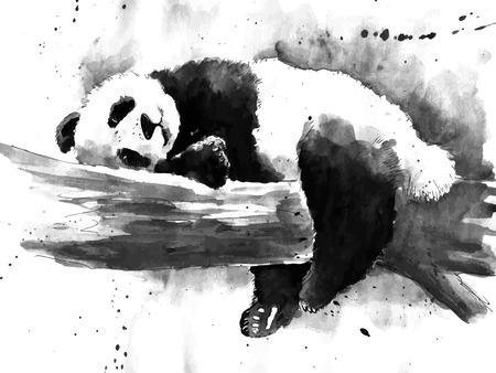 Watercolor black and white panda drawing