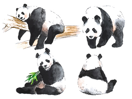 Watercolor black and white four pandas 向量圖像