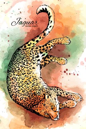 Hand drawn jaguar vector watercolor drawing