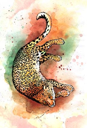 Hand drawn jaguar  watercolor drawing