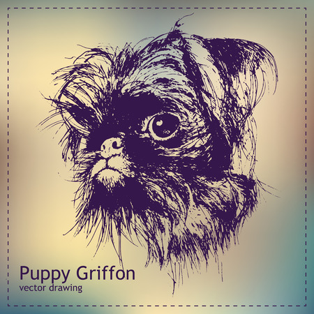 Pen graphics vector puppy griffon drawing Illustration