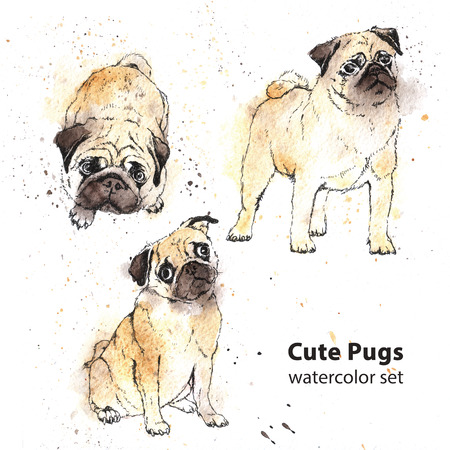 pawl: Watercolor hand-drawn bright-colored Cute pugs Stock Photo