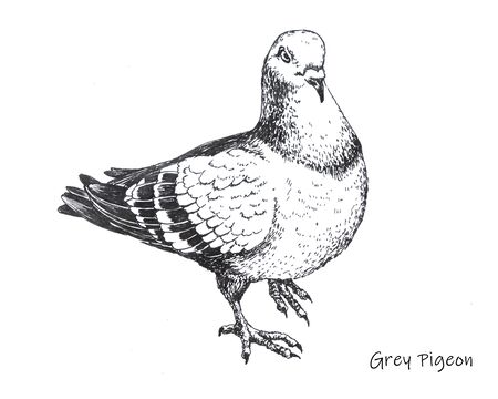 hand-drawn city gray pigeon pen drawing