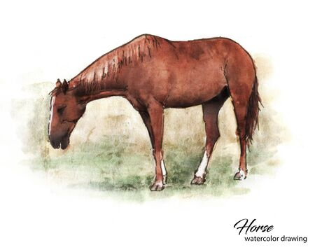 Realistic brown horse eating grass watercolor drawing