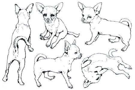 Hand drawn ink Toy Terrier graphic sketch 写真素材