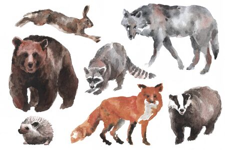 Hand drawn watercolor forest animals on white background