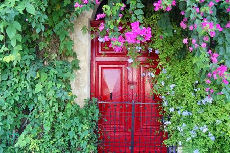 몰타에서 bougainvillea 공장 아름 다운 빨간 문. 스톡 콘텐츠 - 48929481