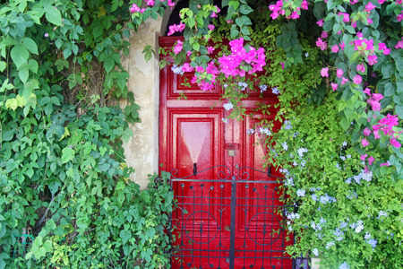 Beautiful red door with bougainvillea plant in Malta. Фото со стока